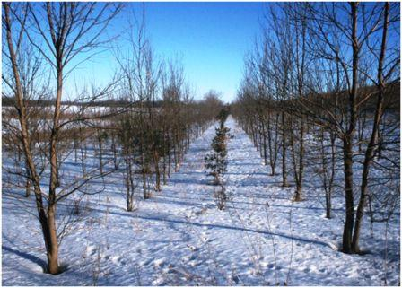 Winter buffer strip