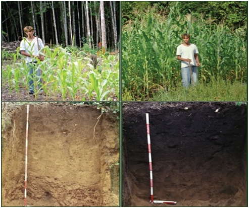 Comparison of traditional rainforests soil with biochar plot