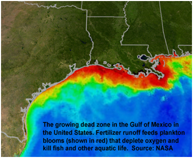 Dead zone in Gulf of Mexico
