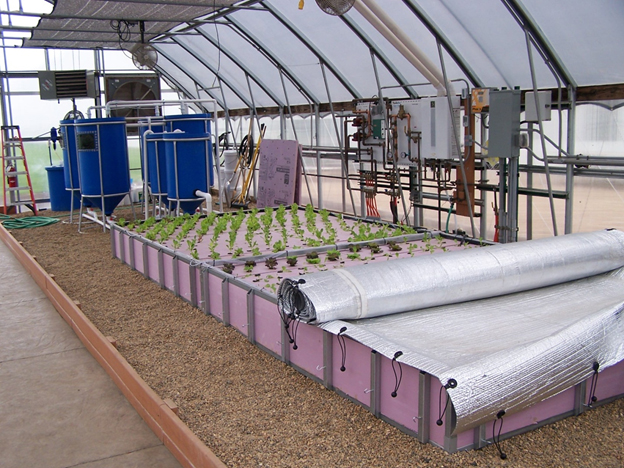Aquaponics | Agricultural Marketing Resource Center