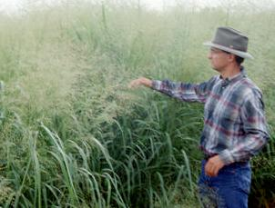 man in switchgrass field